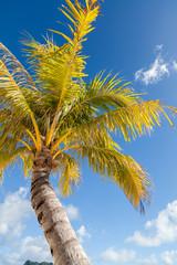 Palma con cielo nuvoloso sullo sfondo