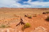 Scenario desertico in Arizona, USA. poster