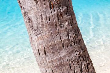 Tronco di palma con mare tropicale sullo sfondo