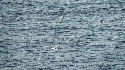 海鳥3_スーパースローモーション