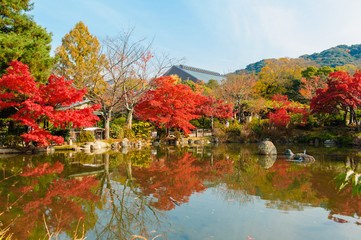 colourful trees with lake in Autumn in Japan