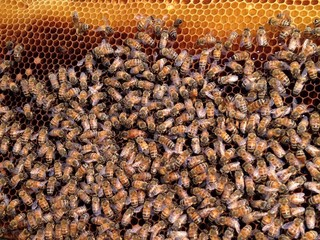 honey keeper