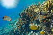 Underwater landscape, Red Sea, Egypt