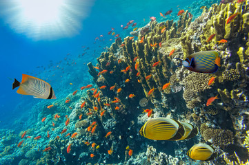 Underwater landscape, Red Sea, Egypt