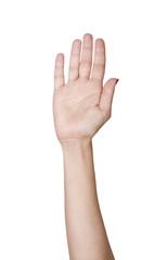 hand raise up