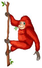 A playful red orangutan