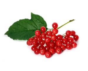 Красная гроздь калины и зелёный листок на белом фоне