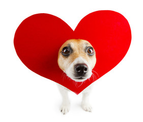 Funny dog with bright beautiful red heart on head