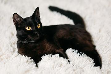 Little Black Kitten On Bed