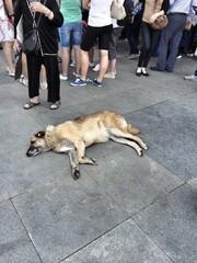 Sokak Köpeği ve İnsanlar