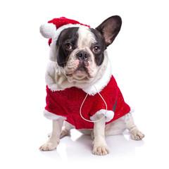 French bulldog in santa costume for Christmas over white