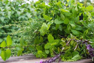 Gartenkräuter, Heilpflanzen