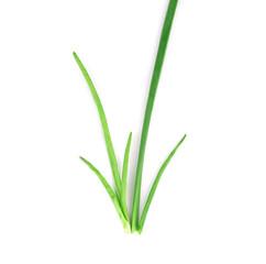 Spring green onion.