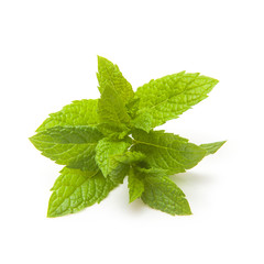 Fresh mint isolated on a white studio background.