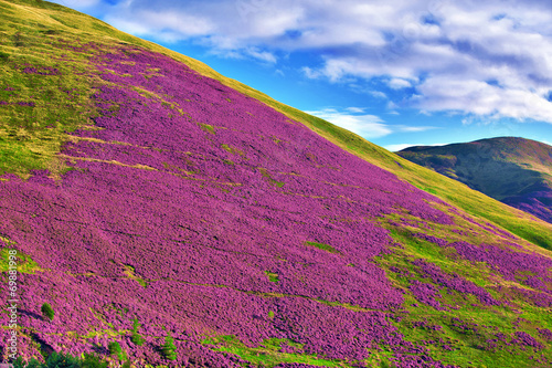 Colorful landscape scenery of Pentland hills slope covered by vi