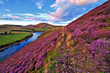Leinwanddruck Bild - Beautiful landscape of scottish nature