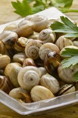 Bovoletti Cucina veneta Snails Lumachine di terra