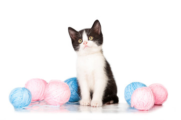 Adorable little black and white kitten with balls of yarn
