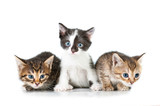 Three adorable little kittens - 69882750