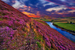 Beautiful landscape of scottish nature - 69883193