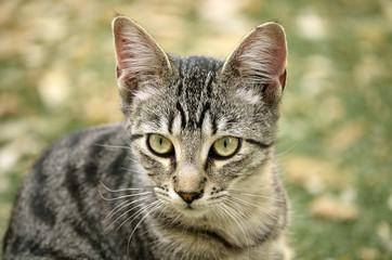 Retrato de un bonito gatito en el parque
