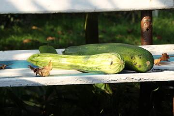 Geerntete Zucchinis auf einer Bank