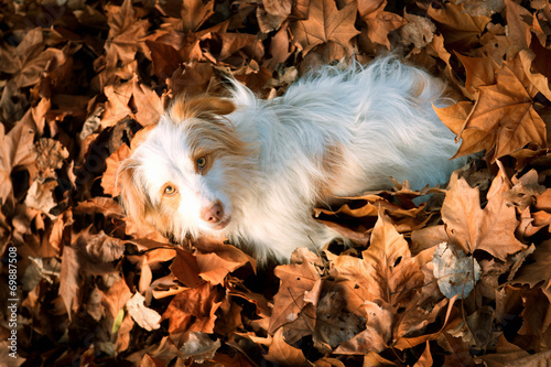 canvas print picture Dog at fall