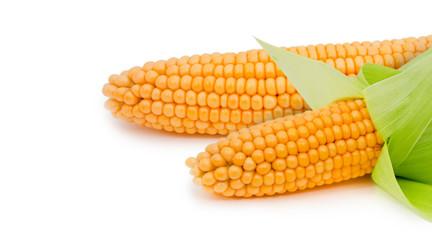 Corn ear isolated