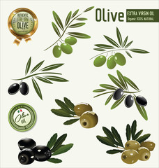 Olive branch collection