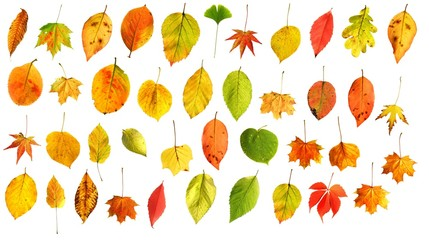 set of colourful autumn leaves isolated on white