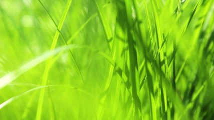 Green Spring Grass with Soft Sunbeams HD