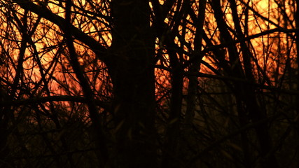 Sunset Through Forest Trees Silhouettes Time Lapse 4K Video