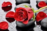 Fototapety Czerwona róża na kamieniu bazaltowym