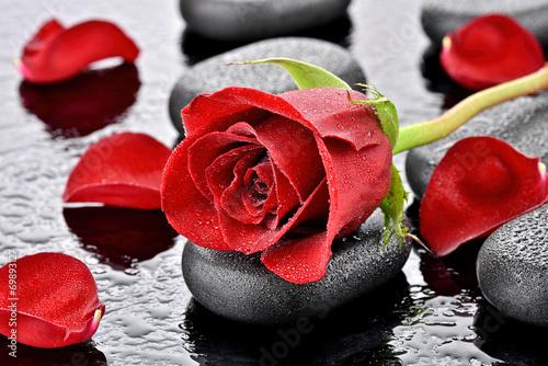 Fototapeta samoprzylepna Czerwona róża na kamieniu bazaltowym