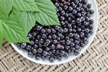 black currant, ripe berries and green leaves