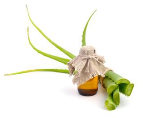 Aloe vera with pharmaceutical bottle.