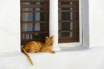 Chat à Sifnos