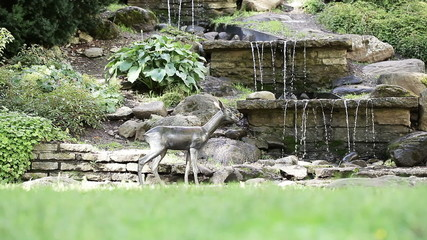 Artificial waterfall with baby deer