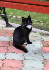 photos of a black cat