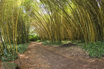 Inside a bamboo forest