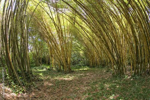 Foto op Canvas Bamboe Inside a bamboo forest