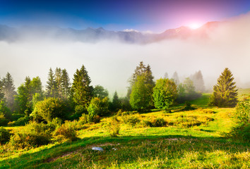 Foggy summer morning in the Triglav national park, near the Bohi