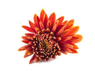 A flower is an aster