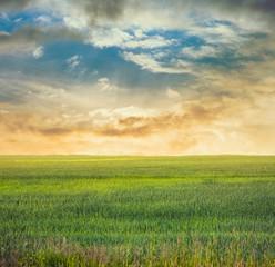 fields, fantasy background
