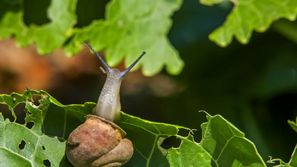 Snail Bending With a Leaf