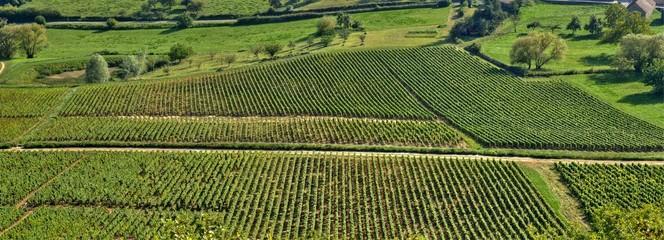 Vignes à Givry en Bourgogne.