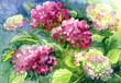 "Leinwanddruck Bild - Drawing ""Blossoming Hydrangeas"". Paper, water color"