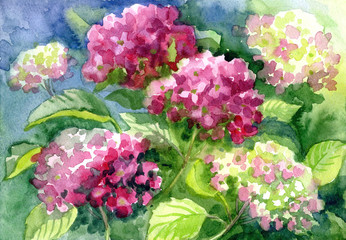 "Drawing ""Blossoming Hydrangeas"". Paper, water color"