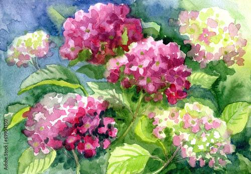 "Leinwanddruck Bild Drawing ""Blossoming Hydrangeas"". Paper, water color"