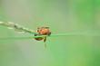 Spinne in Netz